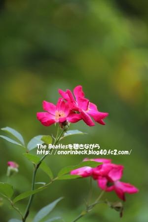 IMG_2016_09_19_9999_118.jpg