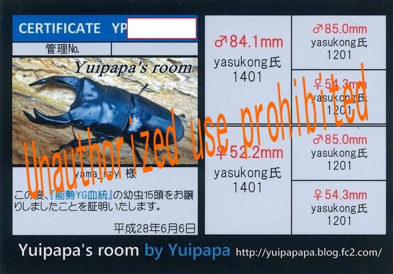 YP-16(YG本家1401インライン)-1