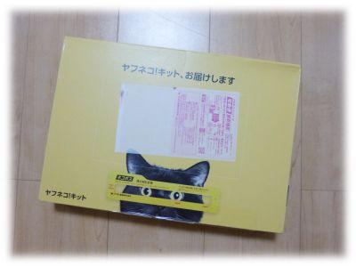 20160520_ynk_01.jpg