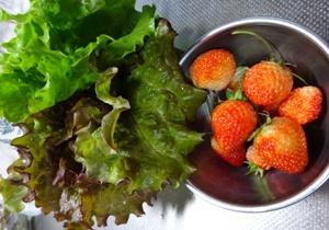 16レタス イチゴ
