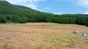 アカそば畑