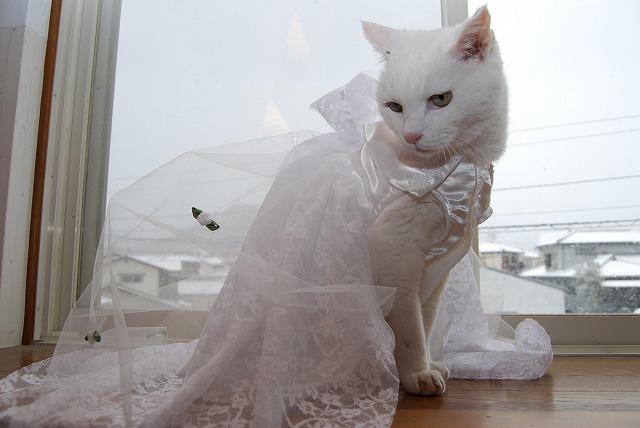 白かドレスで~
