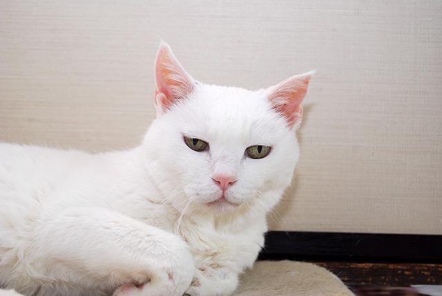 エレベーターば探さんば!