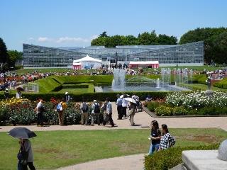 神代植物公園 バラ 4