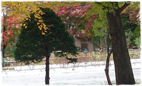 雪DSC_5492