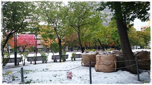 雪DSC_5490