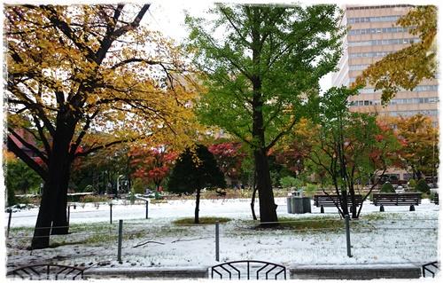 雪DSC_5491