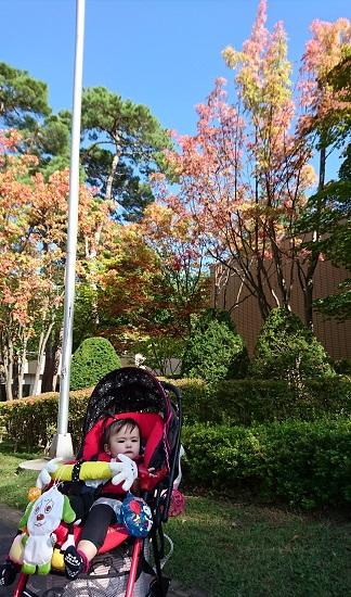 円山動物園 紅葉
