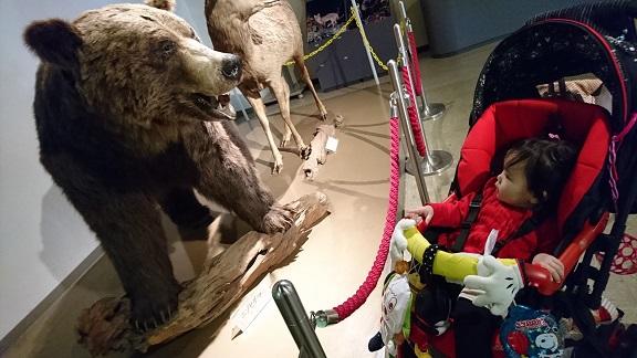 円山動物園 クマの剥製