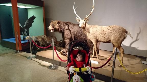 円山動物園 剥製
