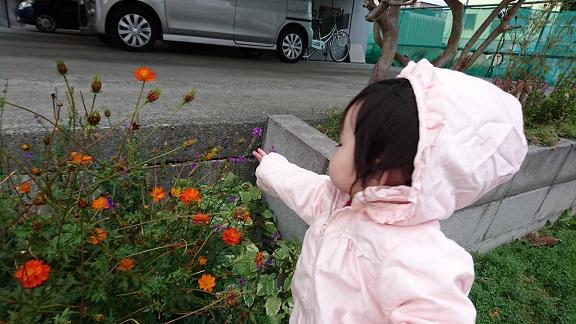 お花が気になる乙女