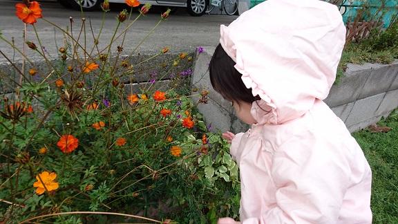 お花が気になる乙女2
