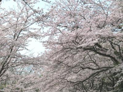 パンチと春旅行