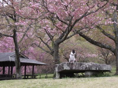 パンチと春旅行 5