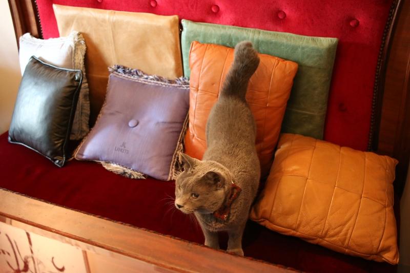 大田区 池上 パンタレイ panta rhei ギャラリー 有吉達宏 ariyoshi tatsuhiro 猫