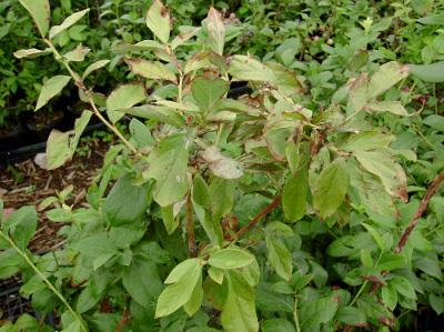 枝が枯れる病気初期症状