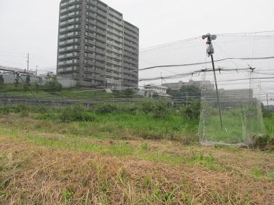20160708摘み取り園ネット張