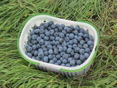 20160716Rb収穫品