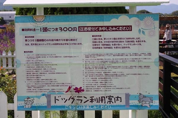 2016.11.04 亀岡夢コスモス園①-2