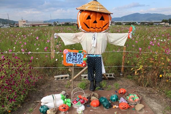 2016.11.06 亀岡夢コスモス園③-7