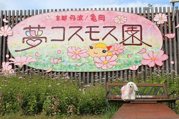 2016.11.07 亀岡夢コスモス園④-14