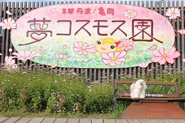2016.11.07 亀岡夢コスモス園④-15
