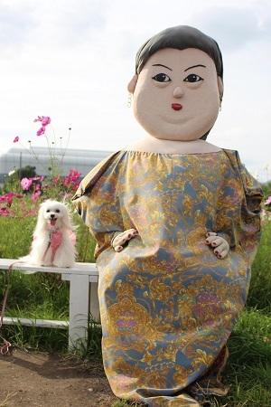 2016.11.07 亀岡夢コスモス園④-23