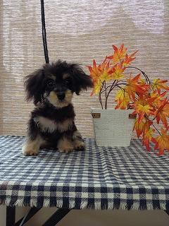 2016-10-13 二藤部ライム