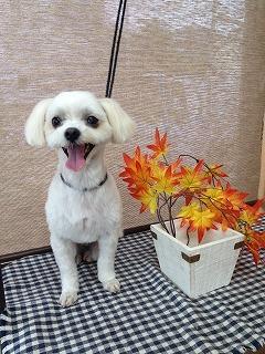 2016-11-02 金丸そら