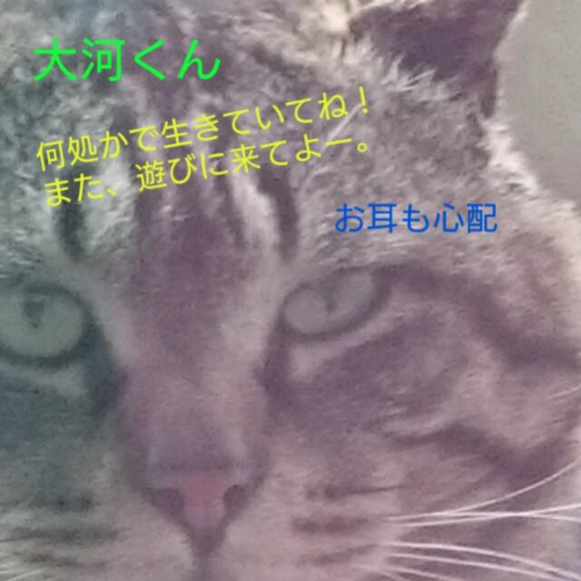 201604271555370d6.jpg