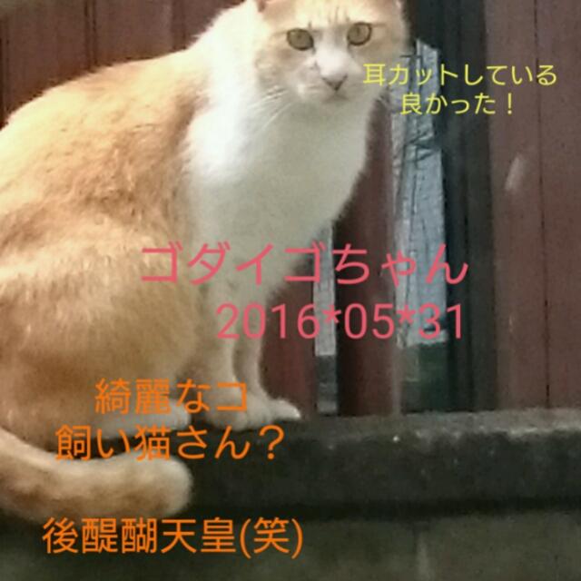 201605311015236c8.jpg