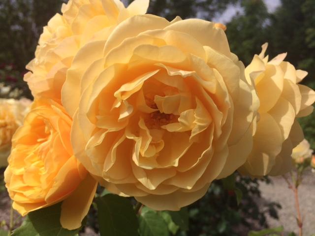 羽幌薔薇園7