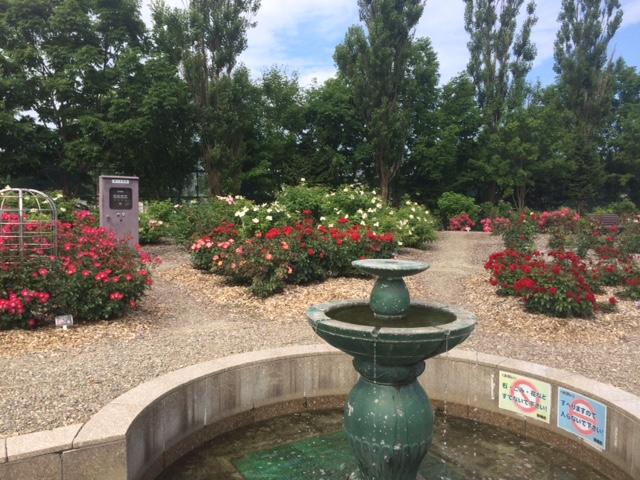 羽幌薔薇園14