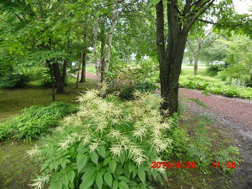 CIMG0371六花の森