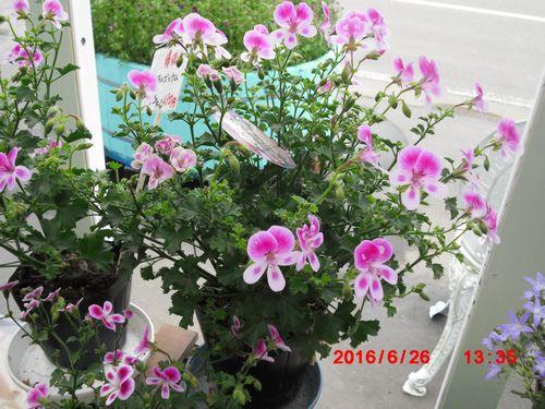 お土産の花