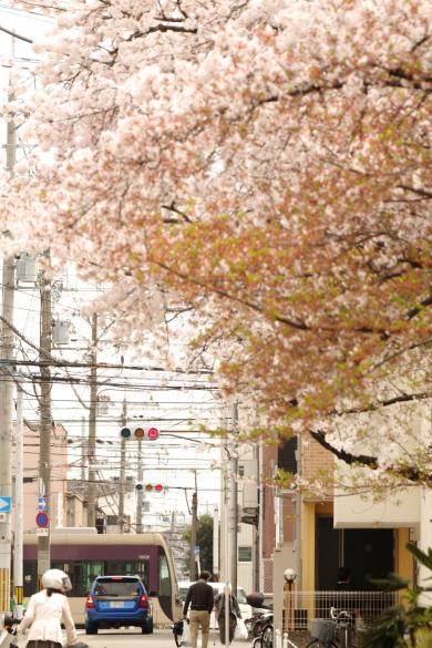 2016/4/9 阪堺電軌阪堺線 神明町~妙国寺前