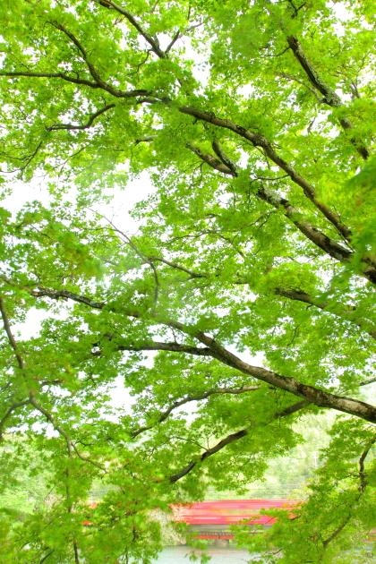 2016/4/17 和歌山電鐵貴志川線 大池遊園