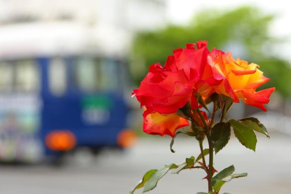 2009年 阪堺電軌阪堺線 綾ノ町