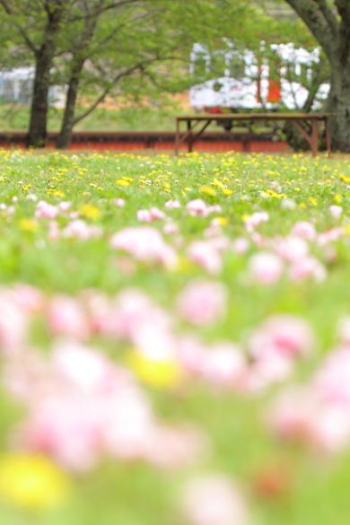 2016/4/24 和歌山電鐵貴志川線 大池遊園