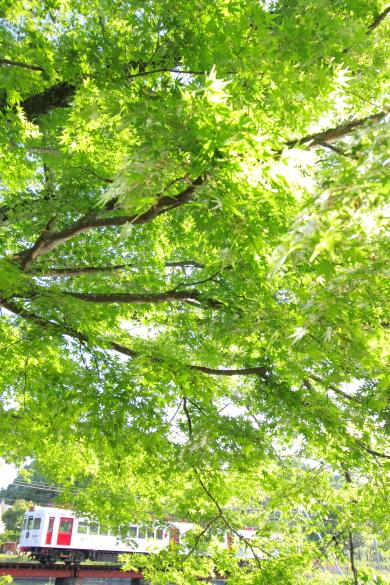2016/5/4 和歌山電鐵貴志川線 大池遊園