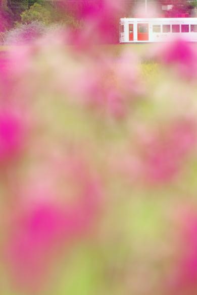 2016/9/3 和歌山電鐵貴志川線 大池遊園~西山口