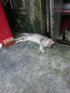 29寝る猫
