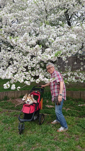 201604 春のお花見DSC_2277