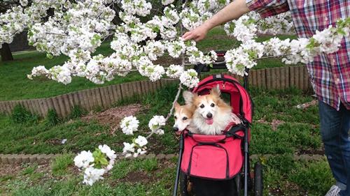 201604 春のお花見DSC_2278