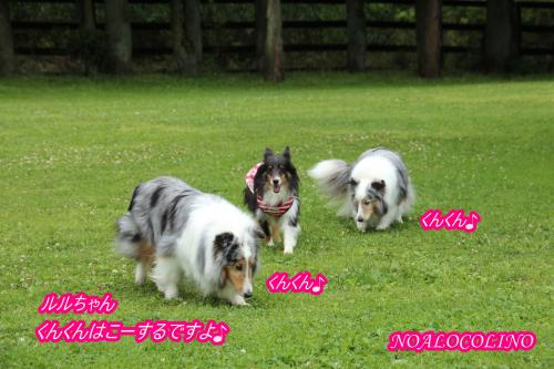 IMG_6808_convert_20160619151806.jpg