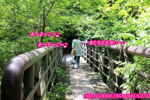 IMG_7535_convert_20160725135951.jpg
