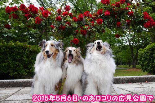 P1120438_convert_20160510163040.jpg