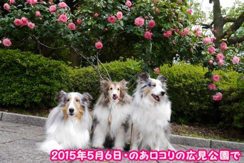 P1120460_convert_20160510163132.jpg