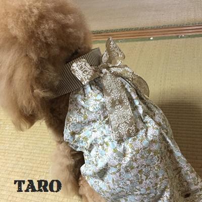 taro1.jpg