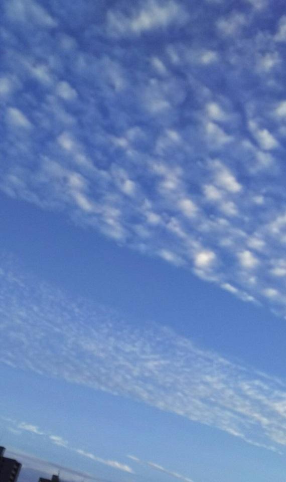 10月15日の夕方~の空は天界の白鳥が翼を広げたような、きれいな青と白の空でした7